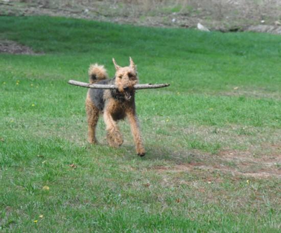 """I found a stick"""