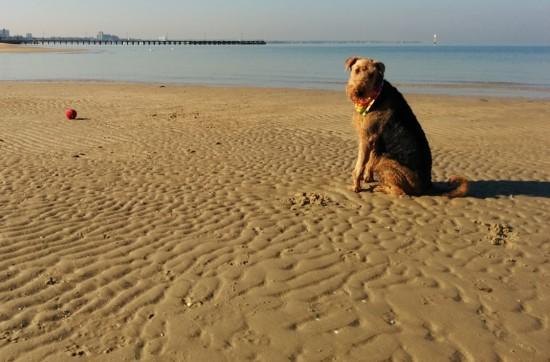 Anyone for Fetch? A Swim?